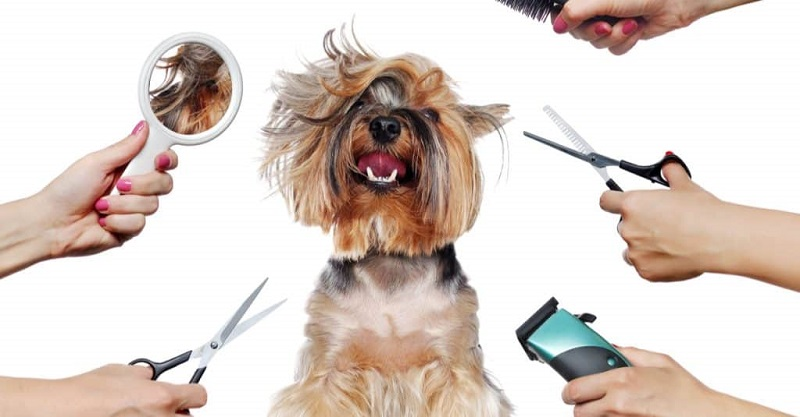 Why Is Grooming Your Dog Important